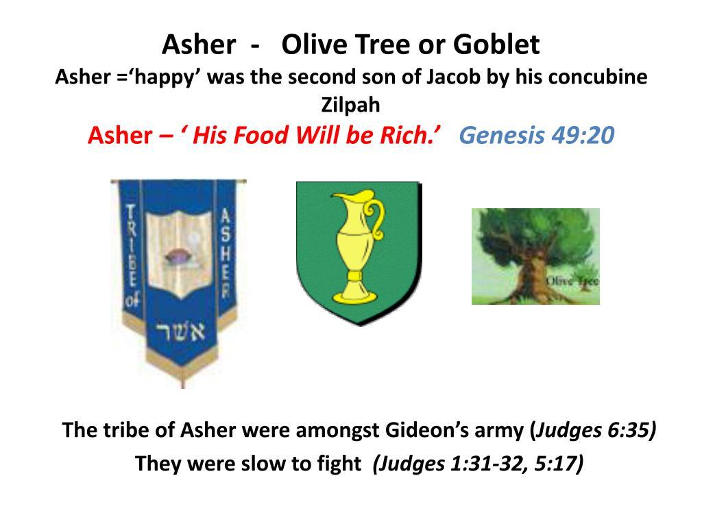 Asher  -   Olive Tree or Goblet