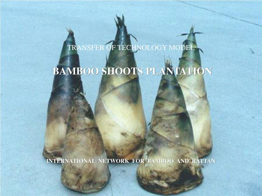 transfer of technology model bamboo shoots plantation l.