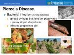 pierce s disease