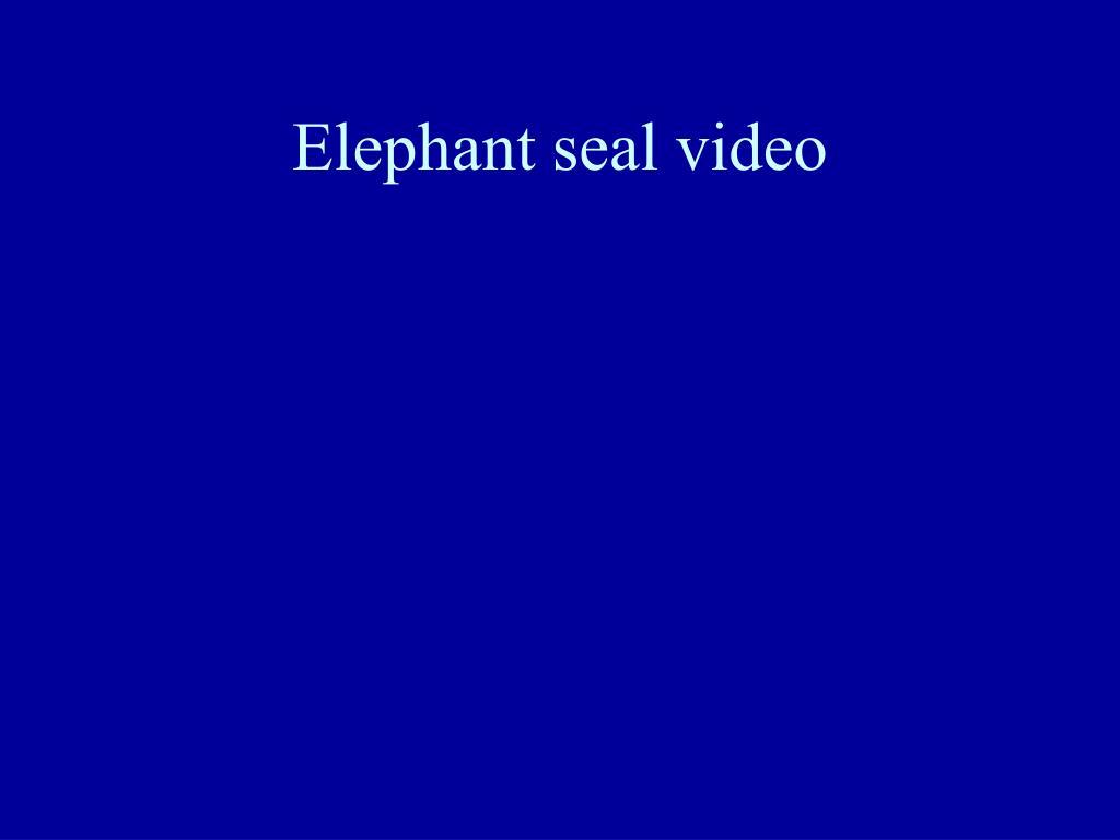 Elephant seal video