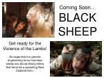 coming soon black sheep