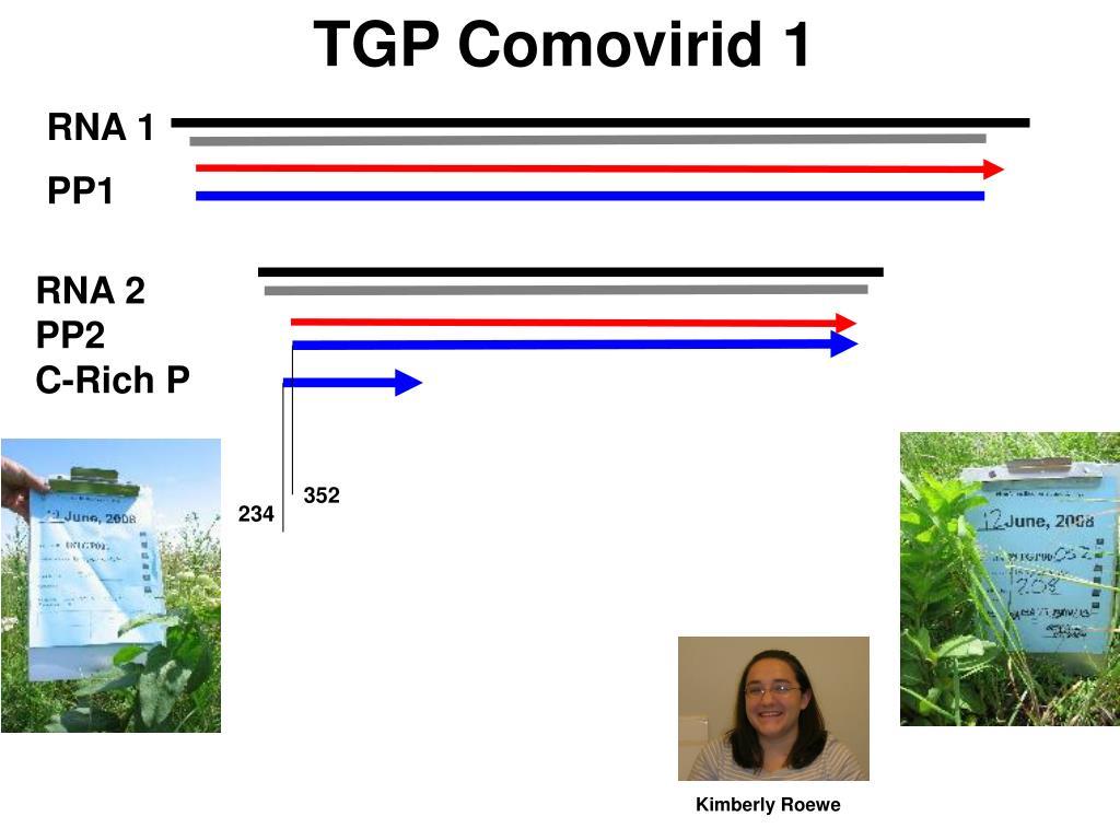 TGP Comovirid 1