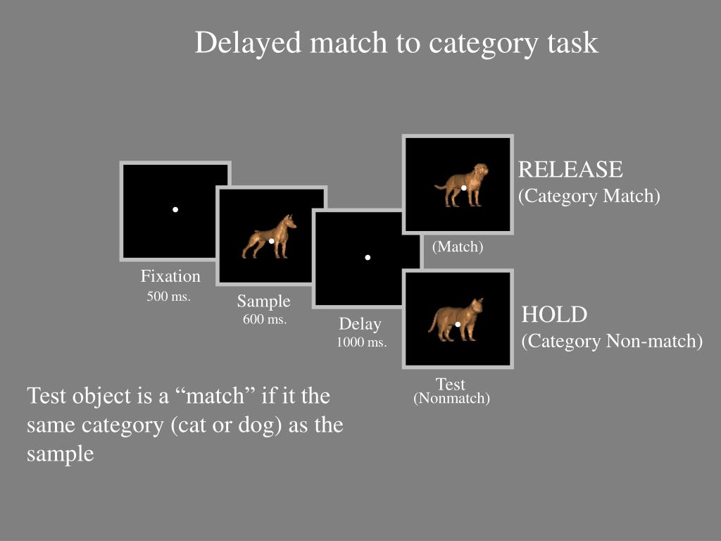 Delayed match to category task