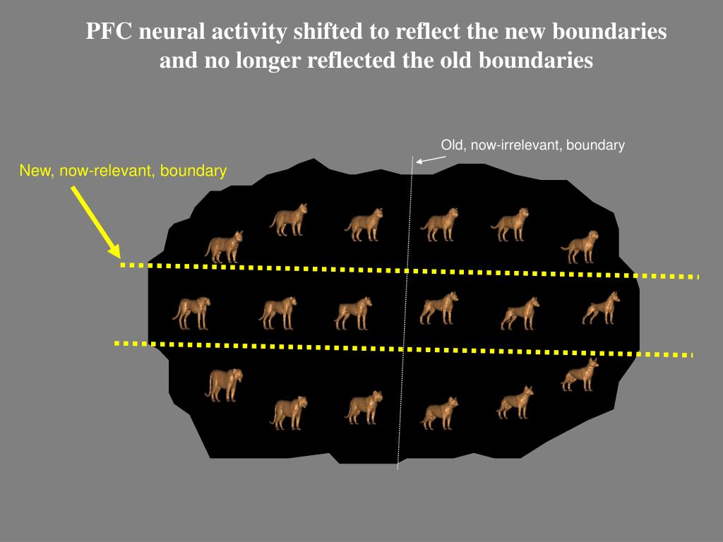 PFC neural activity shifted to reflect the new boundaries