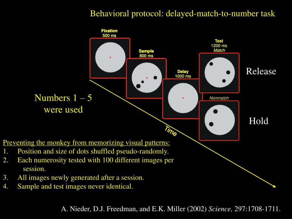 Behavioral protocol: delayed-match-to-number task