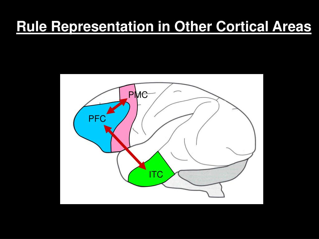 Rule Representation in Other Cortical Areas