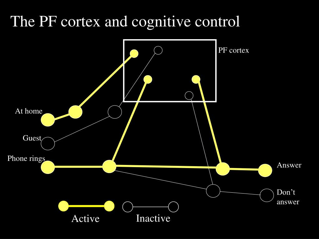 The PF cortex and cognitive control