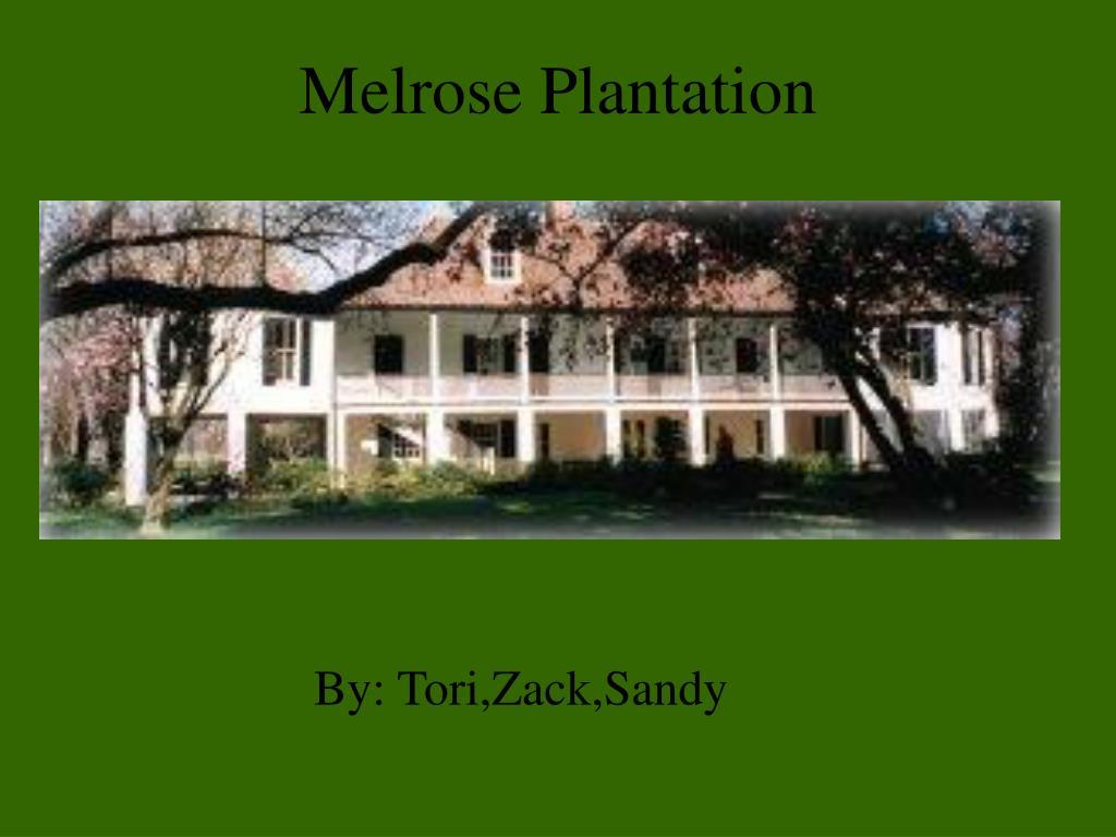 melrose plantation l.
