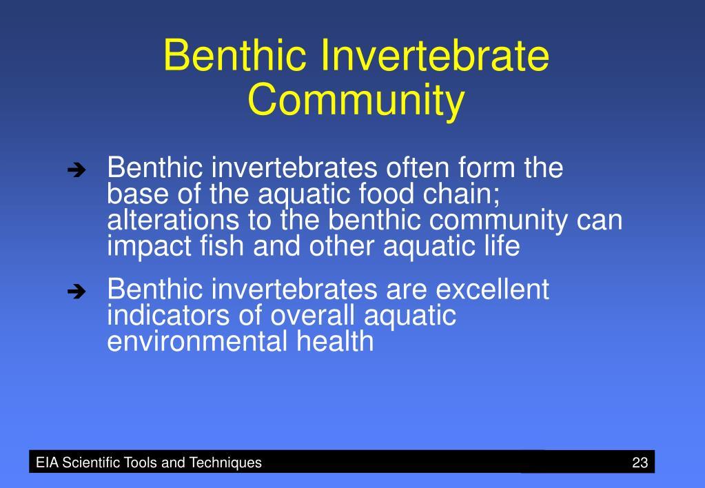 Benthic Invertebrate Community