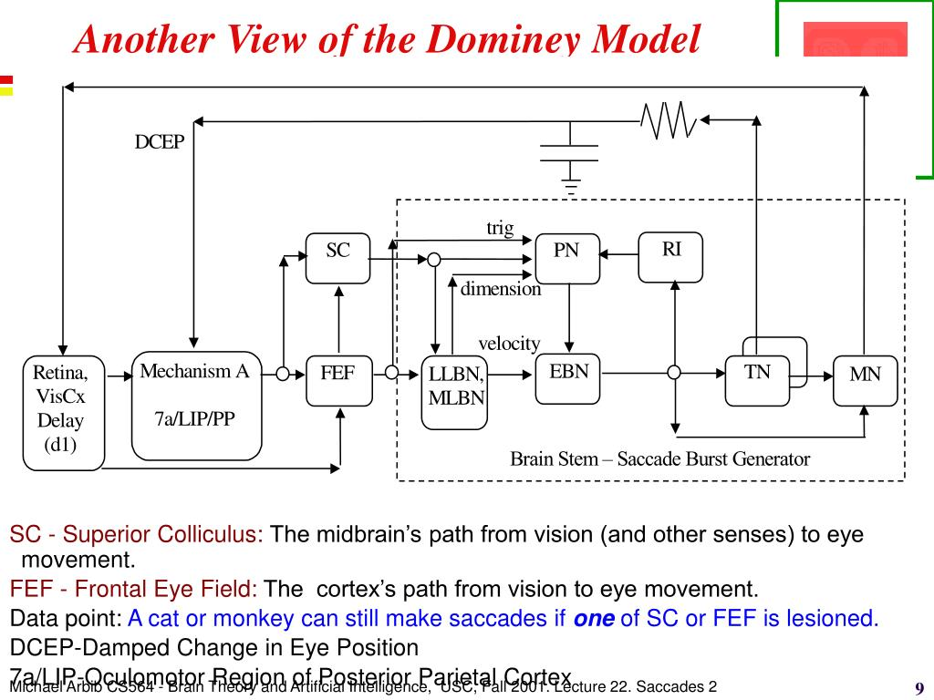 Another View of the Dominey Model