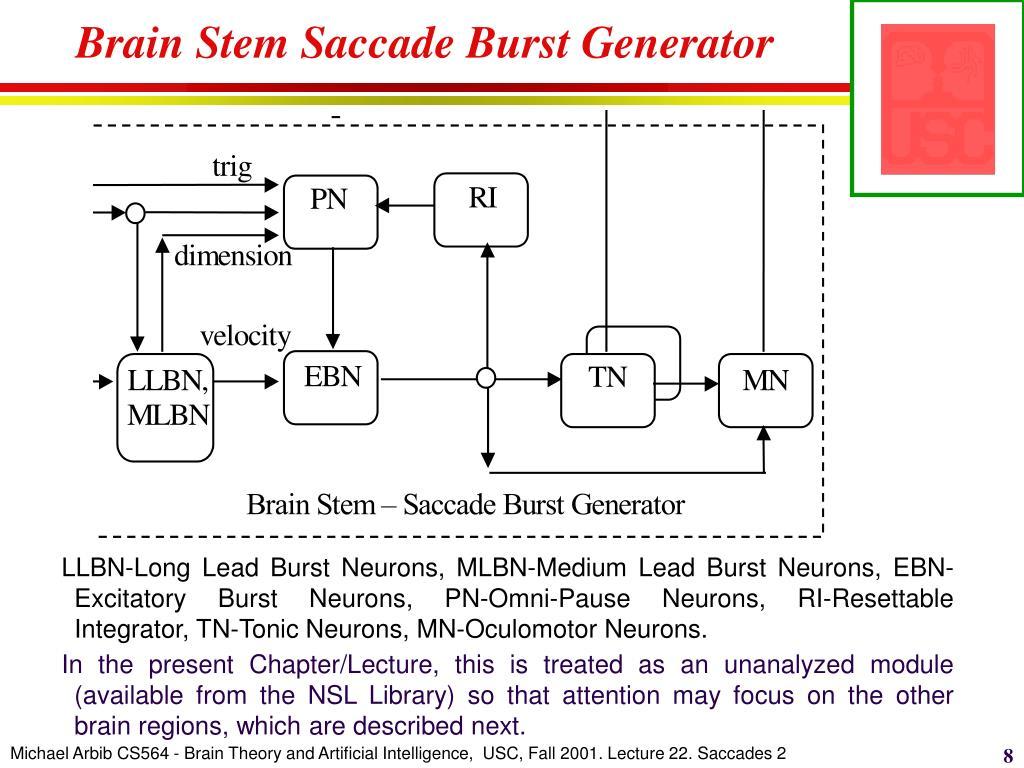 Brain Stem Saccade Burst Generator