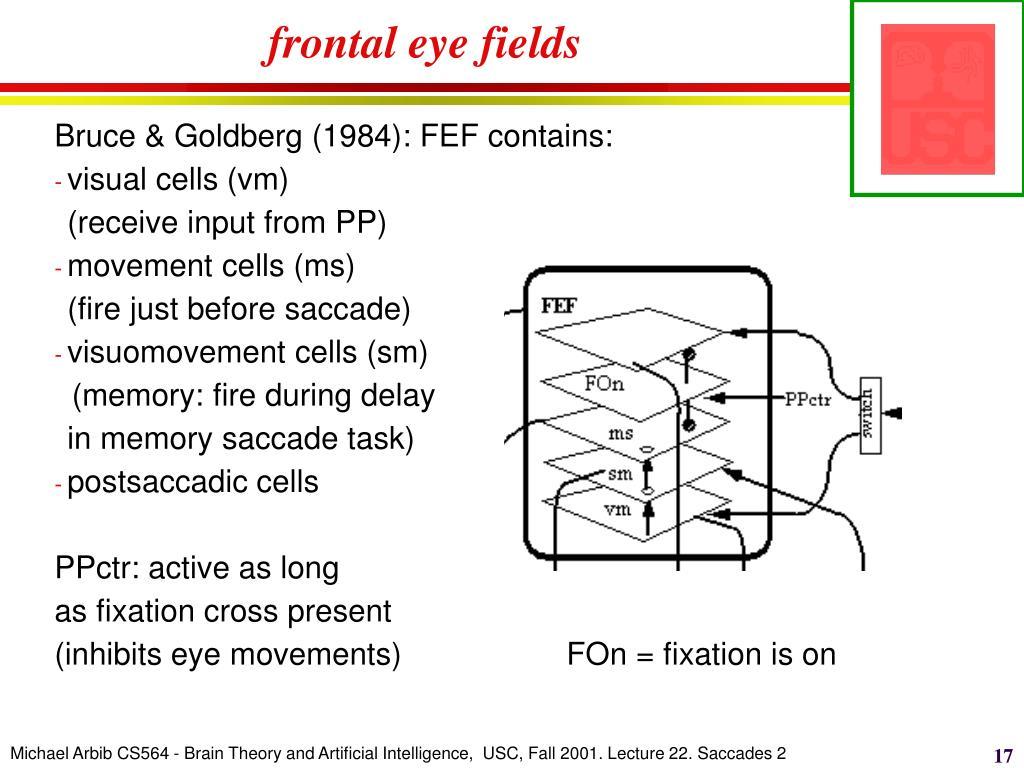 frontal eye fields