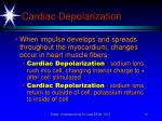 cardiac depolarization