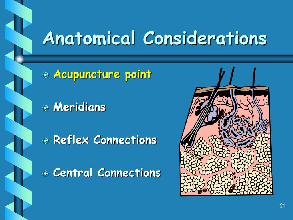 Anatomical Considerations