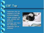 csf tap