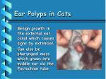 ear polyps in cats