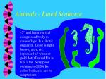 animals lined seahorse
