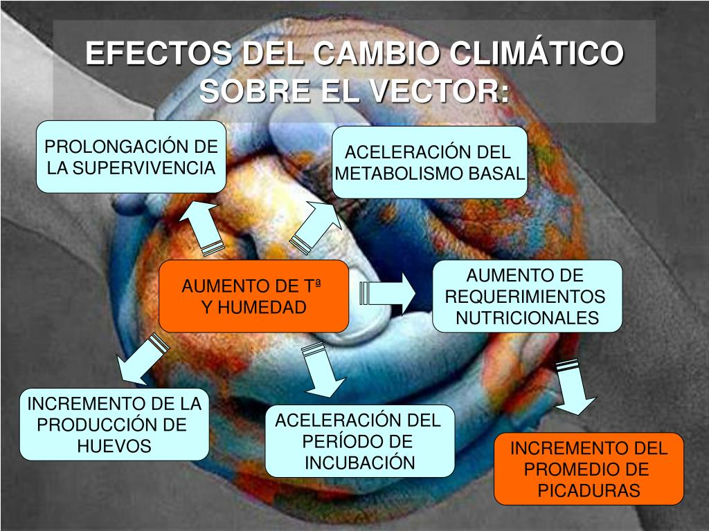 EFECTOS DEL CAMBIO CLIMÁTICO SOBRE EL VECTOR: