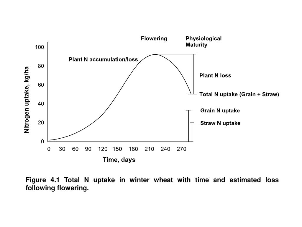 Figure 4.1 Total N uptake in winter wheat with time and estimated loss following flowering.