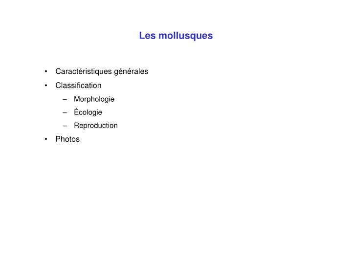 Les mollusques3