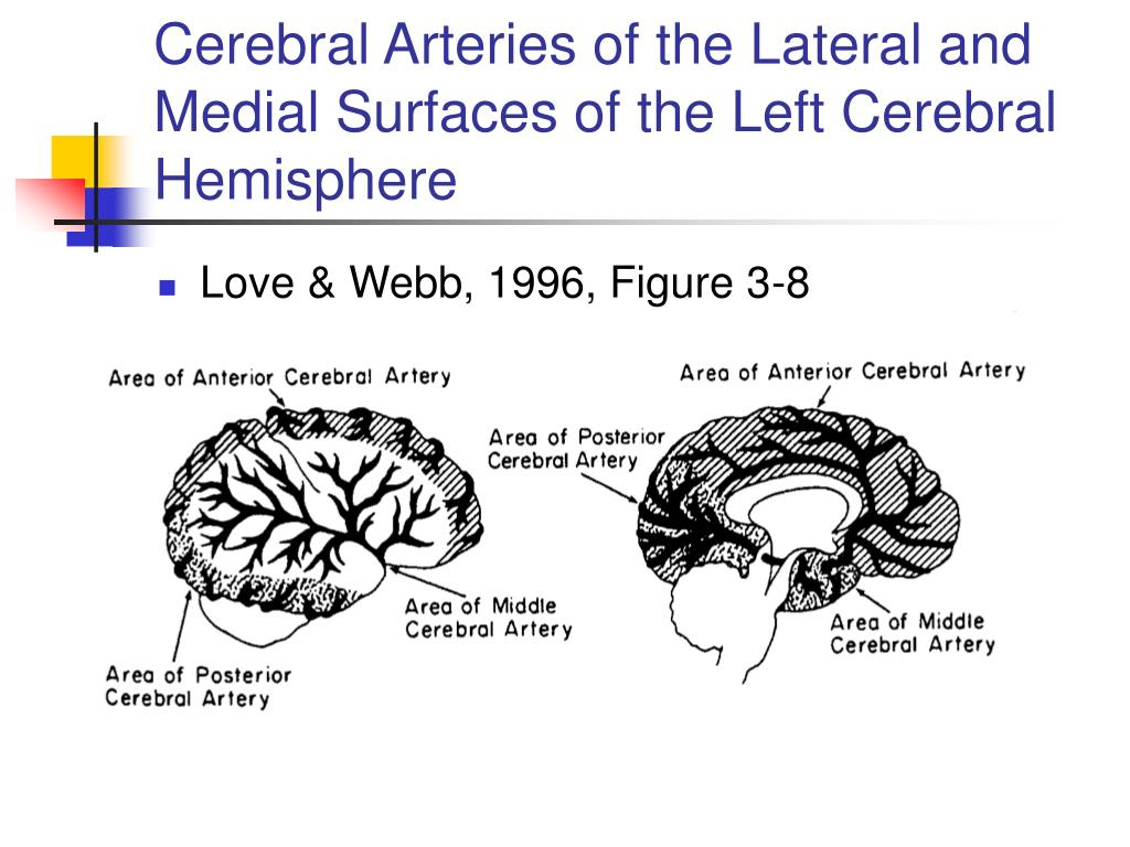 Cerebral Arteries of the Lateral and Medial Surfaces of the Left Cerebral Hemisphere
