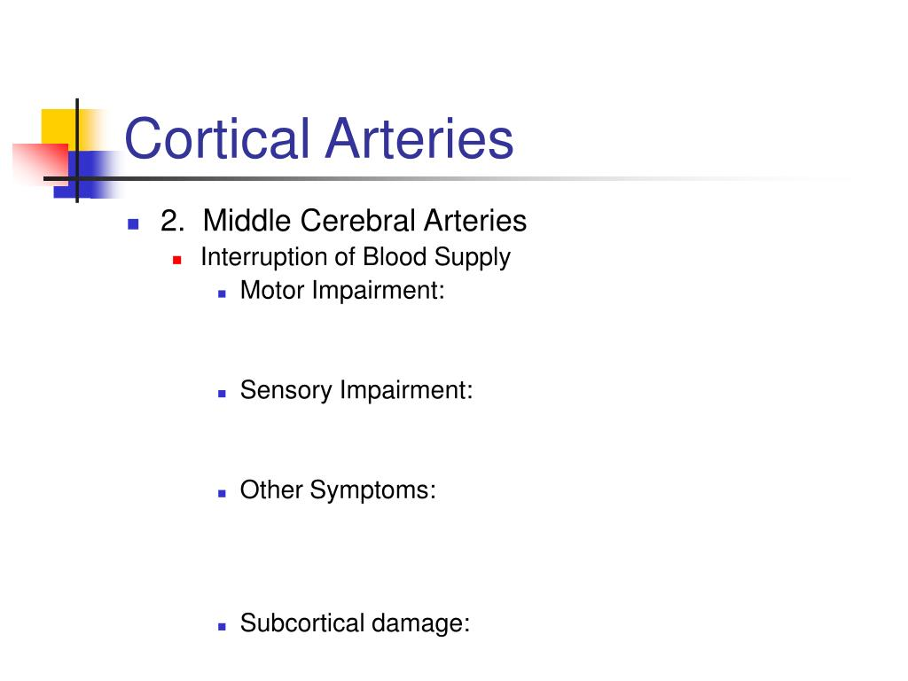 Cortical Arteries