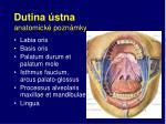 dutina stna anatomick pozn mky