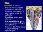 hltan anatomick pozn mky