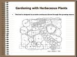 gardening with herbaceous plants12