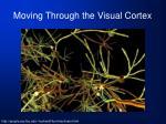 moving through the visual cortex