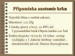 p ipom nka anatomie krku
