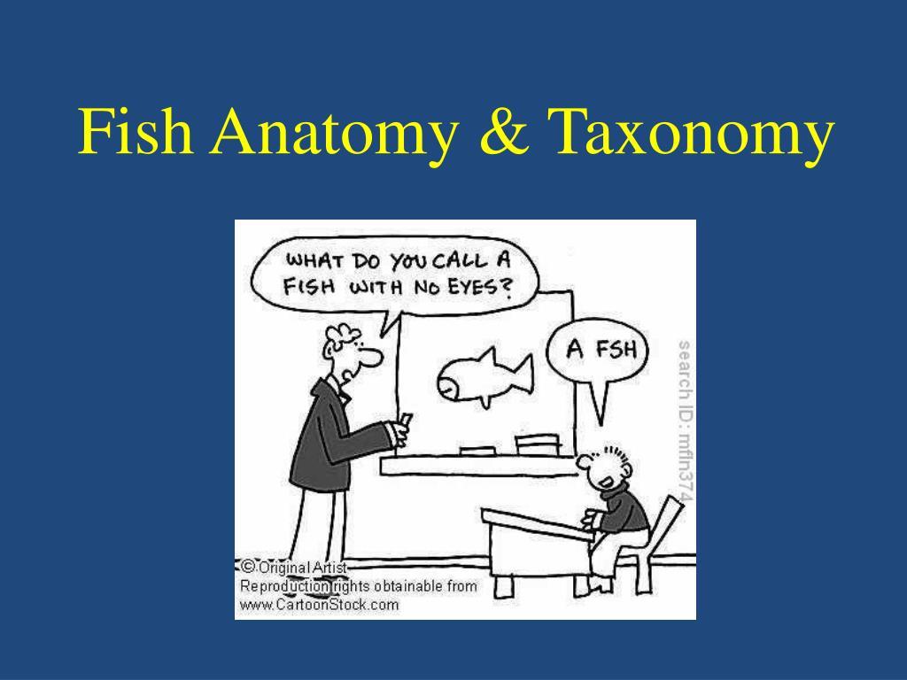 PPT - Fish Anatomy & Taxonomy PowerPoint Presentation - ID:457869