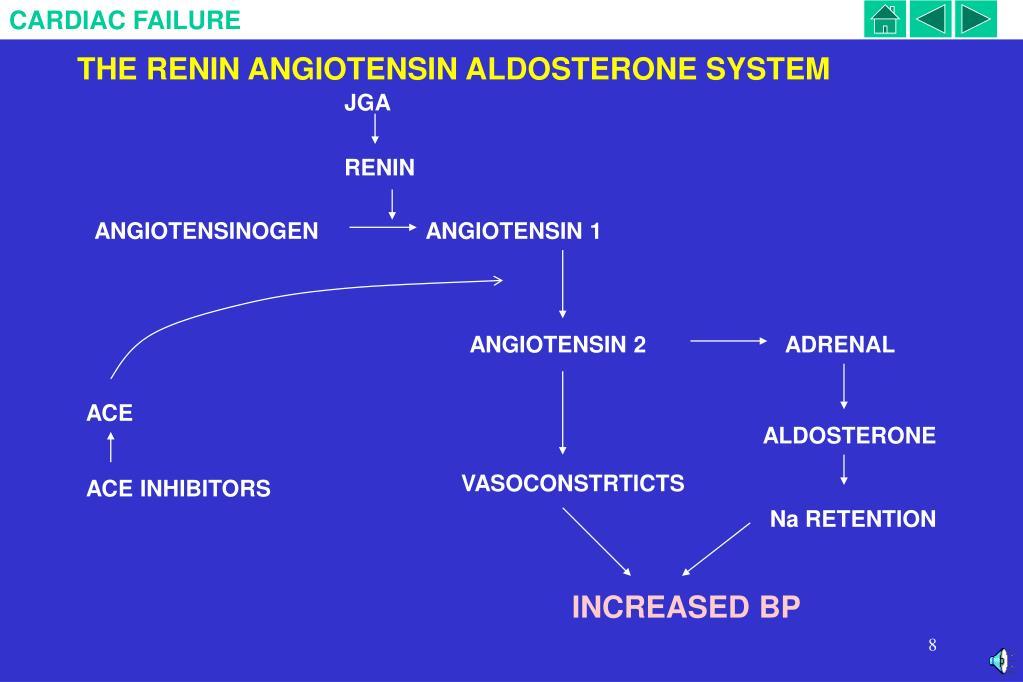 THE RENIN ANGIOTENSIN ALDOSTERONE SYSTEM