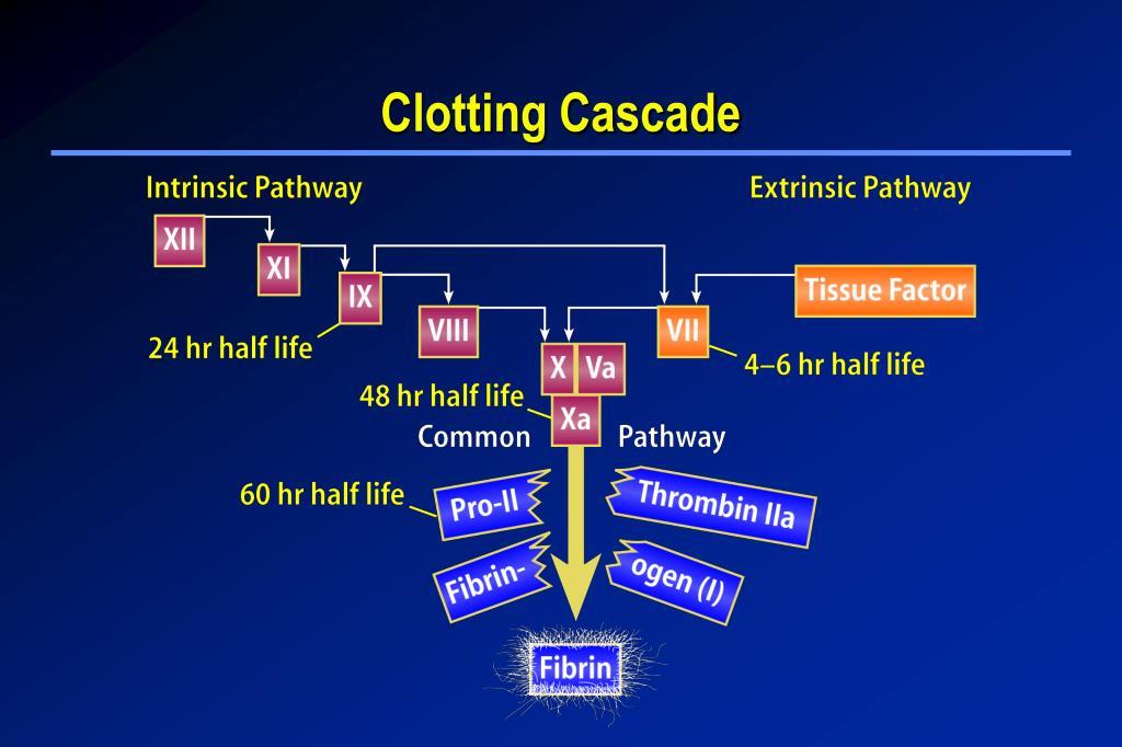Clotting Cascade