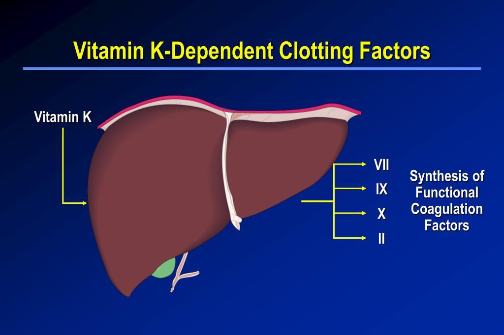 Vitamin K-Dependent Clotting Factors