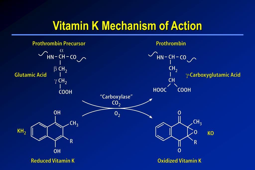 Vitamin K Mechanism of Action