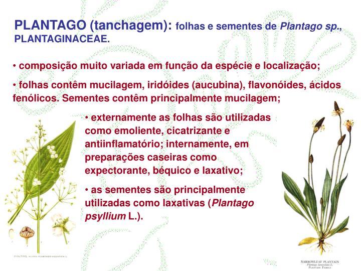 PLANTAGO (tanchagem):