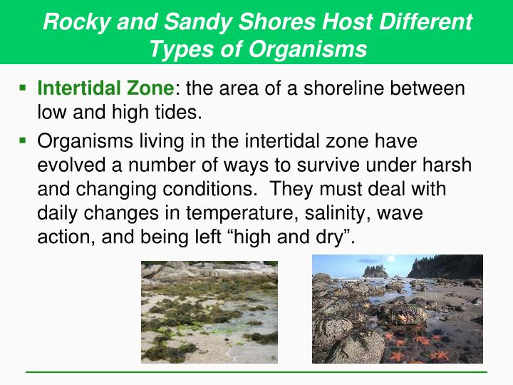 Rocky and Sandy Shores Host Different