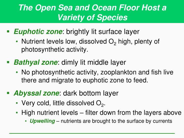 The Open Sea and Ocean Floor Host a