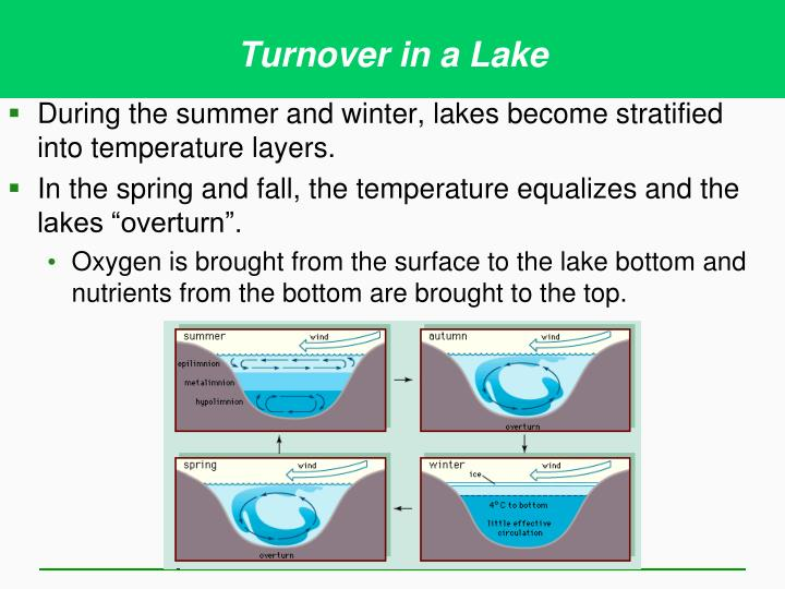 Turnover in a Lake