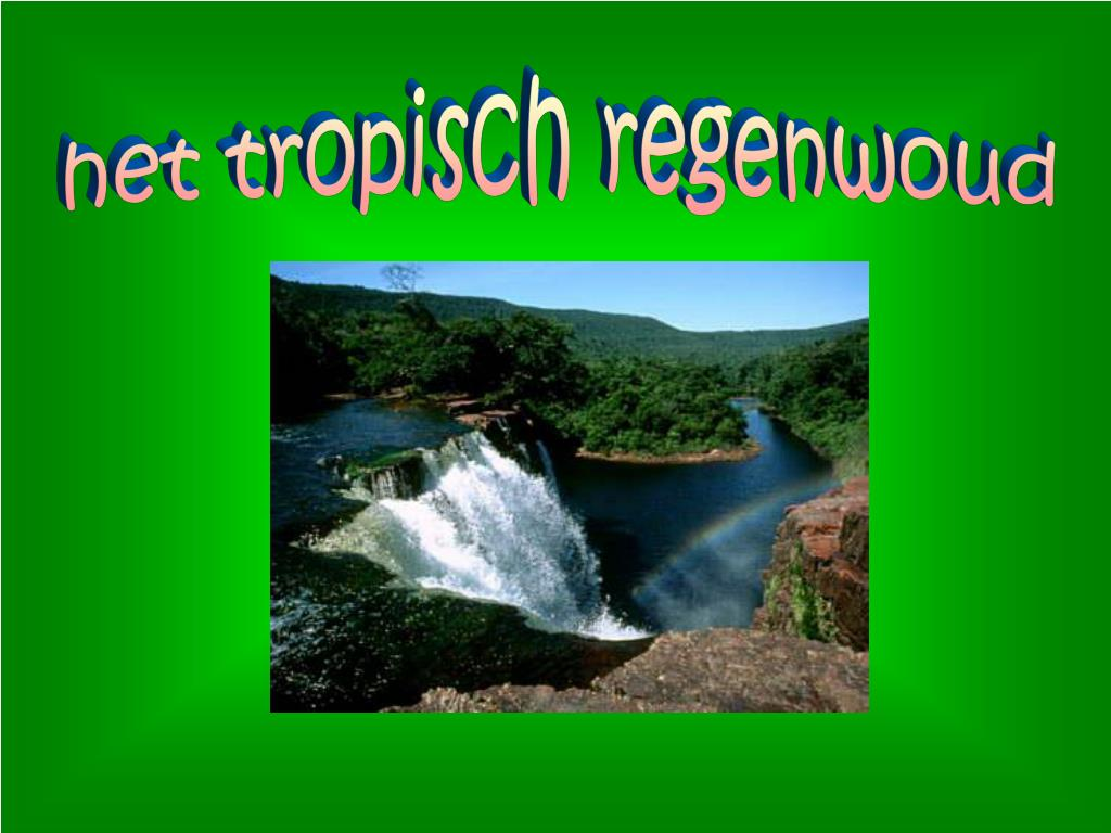 Ppt Het Tropisch Regenwoud Powerpoint Presentation Free