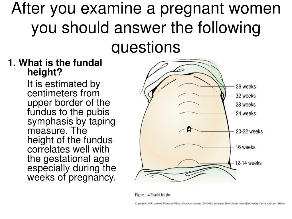PPT - Obstetric physical examination PowerPoint Presentation