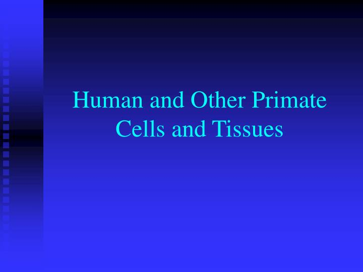human and other primate cells and tissues n.