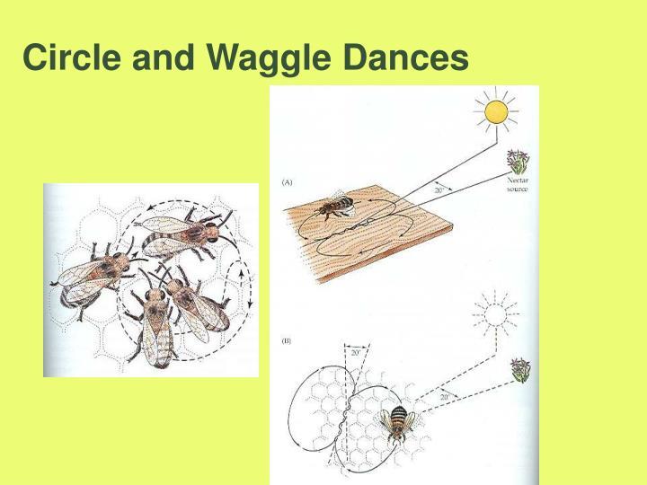 Circle and Waggle Dances