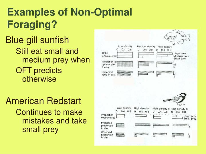 Examples of Non-Optimal Foraging?