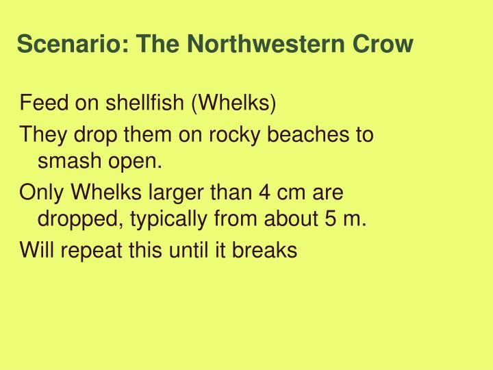 Scenario: The Northwestern Crow