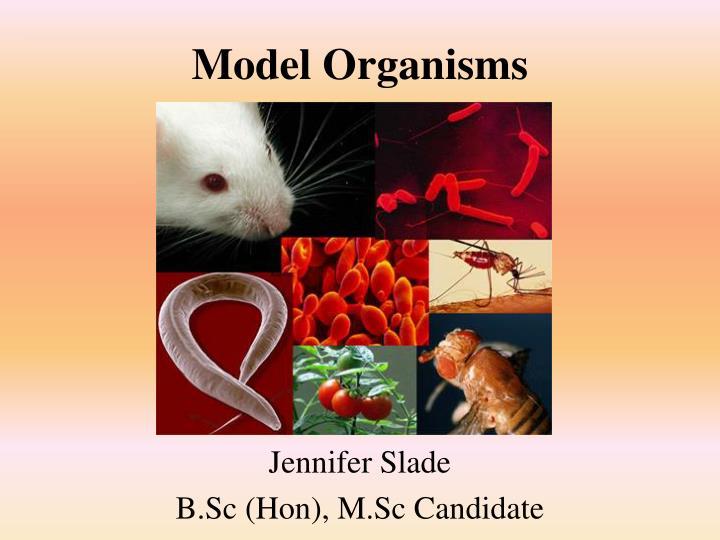 model organisms n.