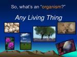 so what s an organism