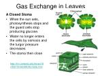 gas exchange in leaves1