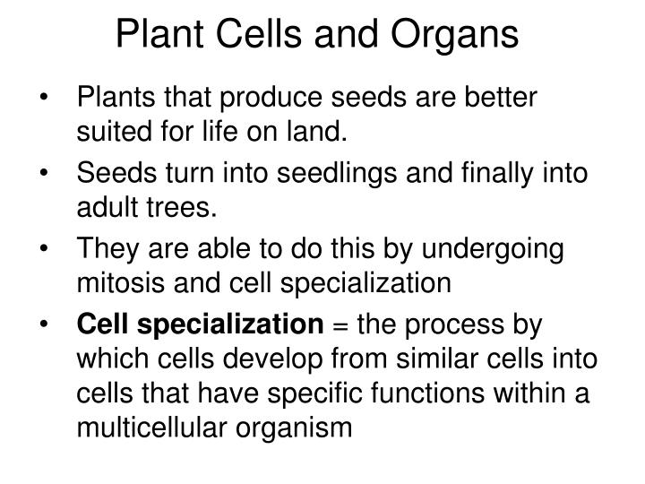 plant cells and organs n.